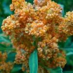 Quinoa | Trendz: Episode 8
