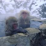 Monkeys | Trendz: Episode 17