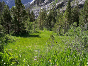 "Because I couldn't bring myself to see any more of ""Basket Case,"" here's an image of a meadow."
