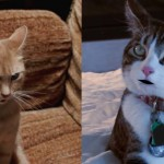 The Voices / A Talking Cat!?! | Double Bill: 19